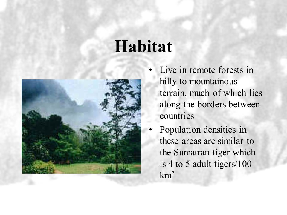 Habitat Live in remote forests in hilly to mountainous terrain, much of which lies along the borders between countries.