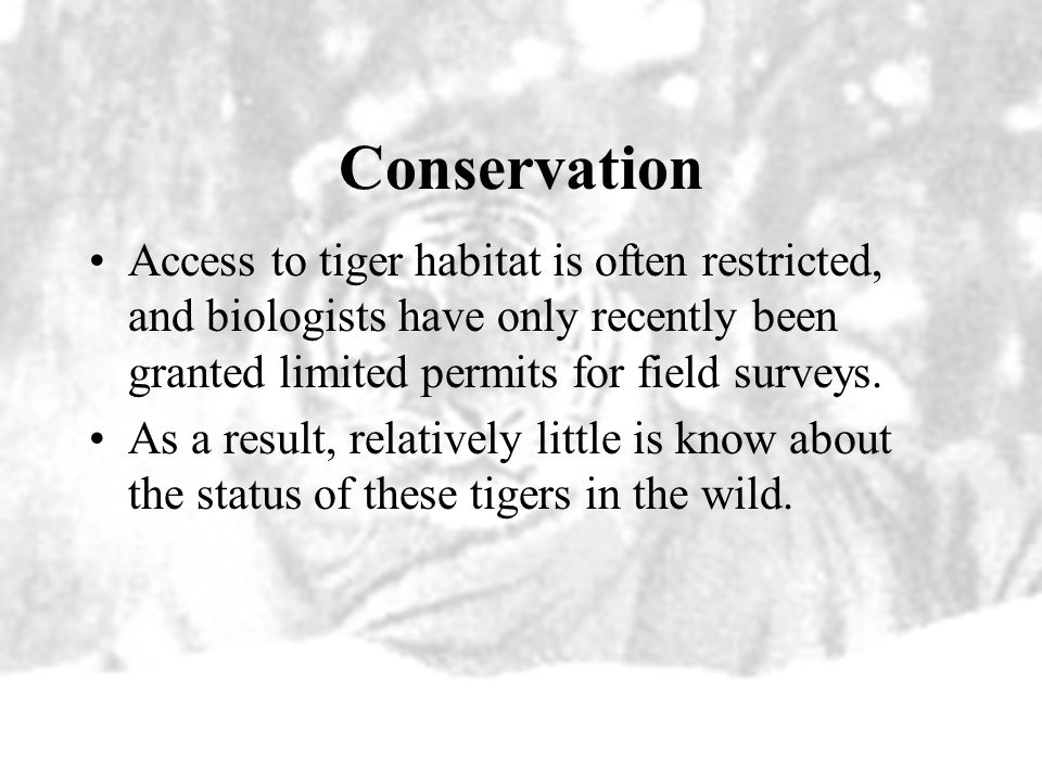Conservation Access to tiger habitat is often restricted, and biologists have only recently been granted limited permits for field surveys.