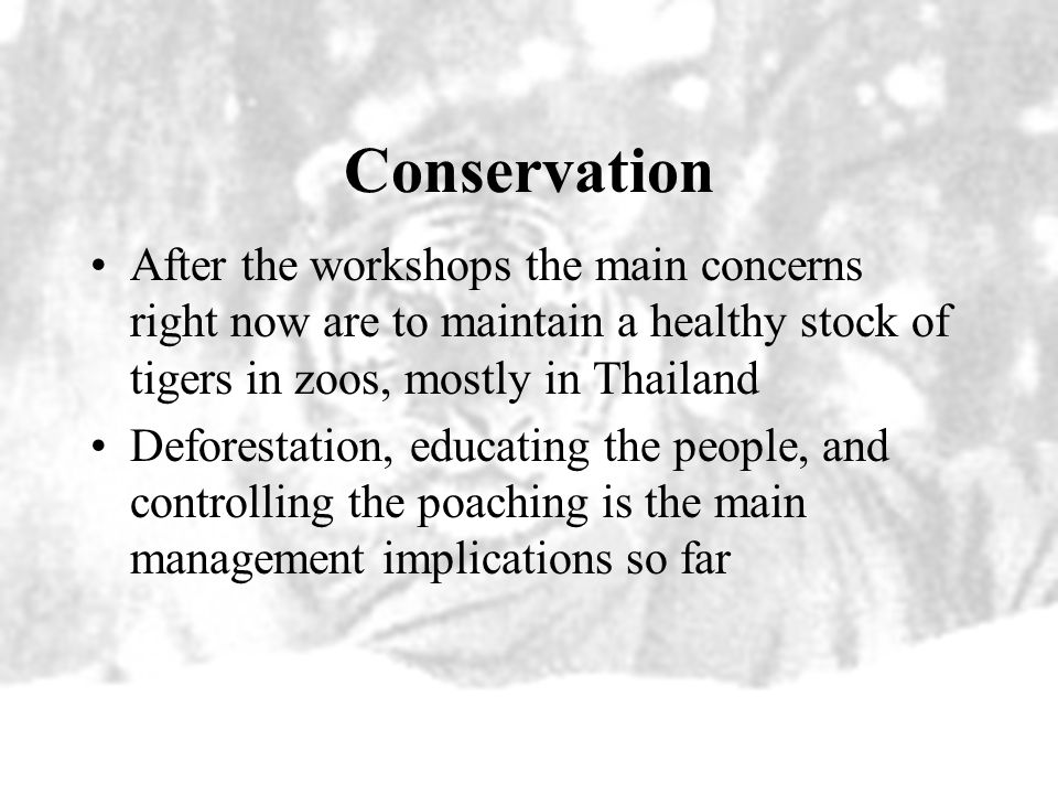 Conservation After the workshops the main concerns right now are to maintain a healthy stock of tigers in zoos, mostly in Thailand.