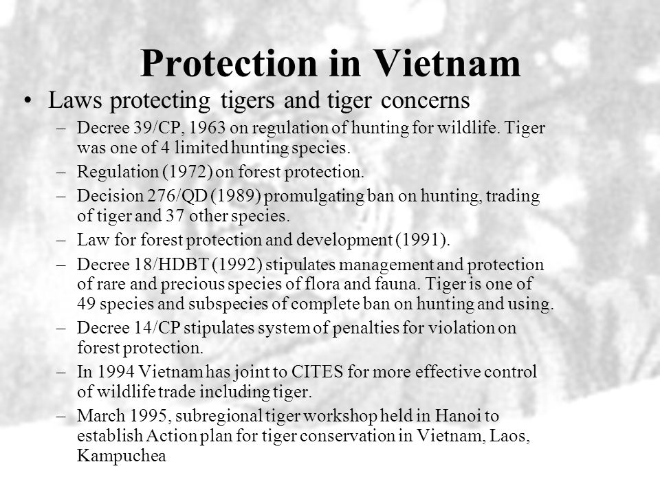 Protection in Vietnam Laws protecting tigers and tiger concerns