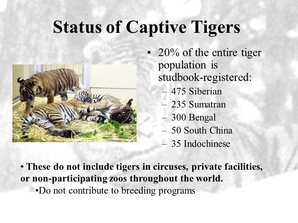 Status of Captive Tigers