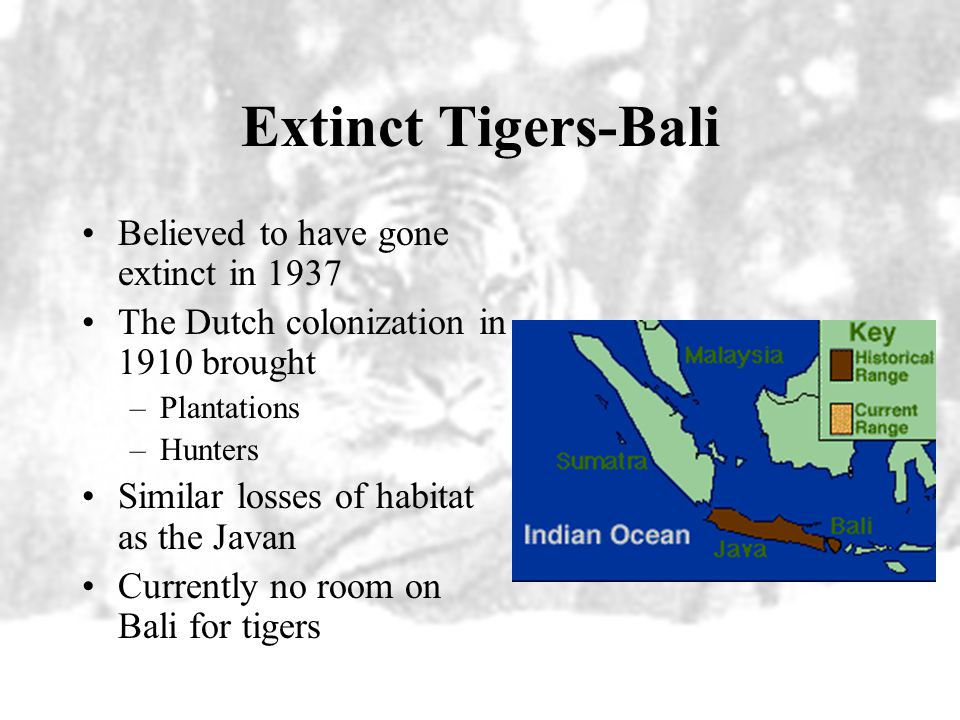 Extinct Tigers-Bali Believed to have gone extinct in 1937
