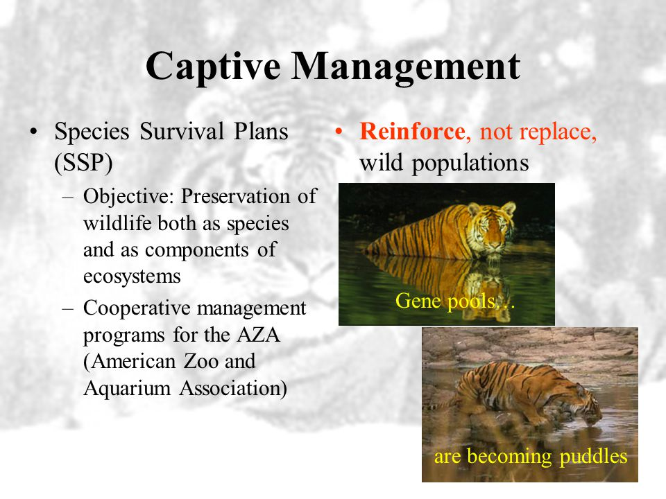 Captive Management Species Survival Plans (SSP)