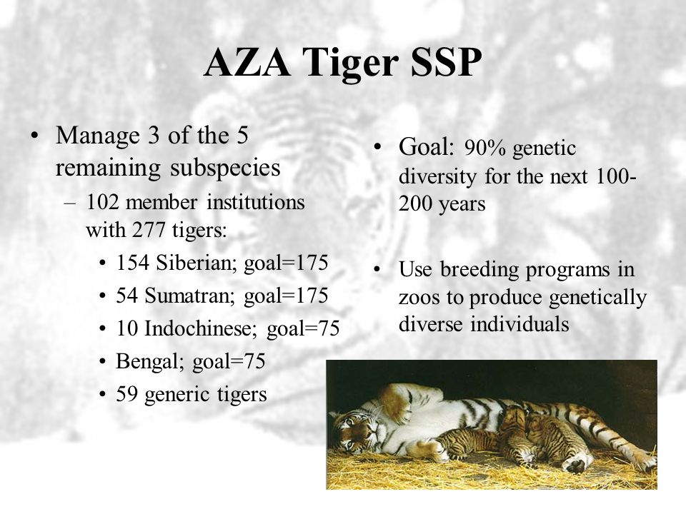 AZA Tiger SSP Manage 3 of the 5 remaining subspecies