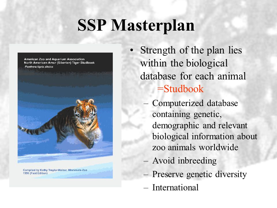 SSP Masterplan Strength of the plan lies within the biological database for each animal =Studbook.