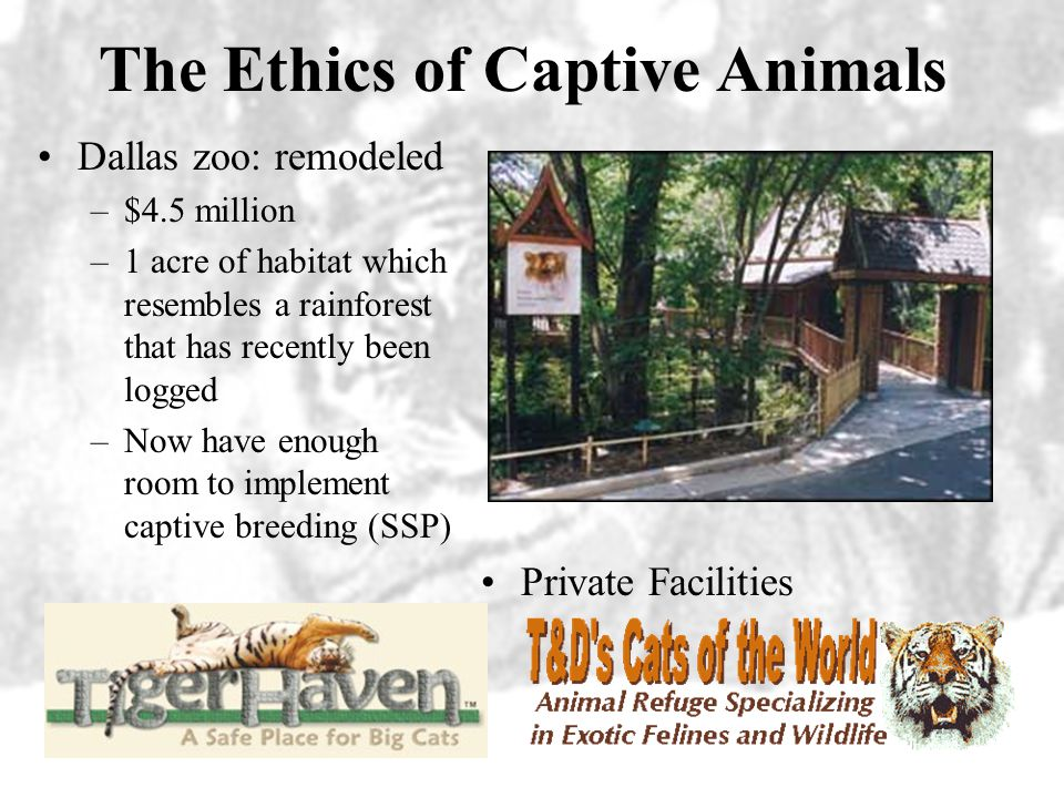 The Ethics of Captive Animals