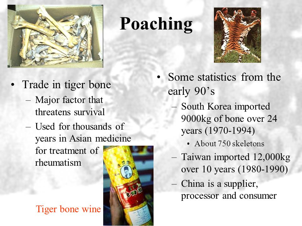Poaching Some statistics from the early 90's Trade in tiger bone