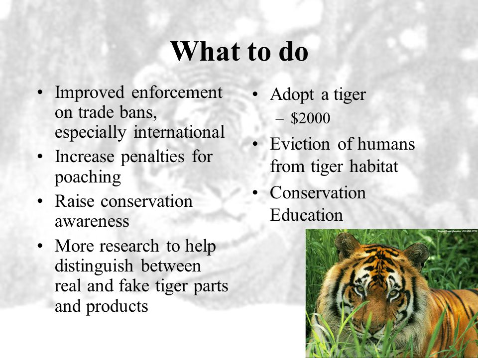 What to do Improved enforcement on trade bans, especially international. Increase penalties for poaching.