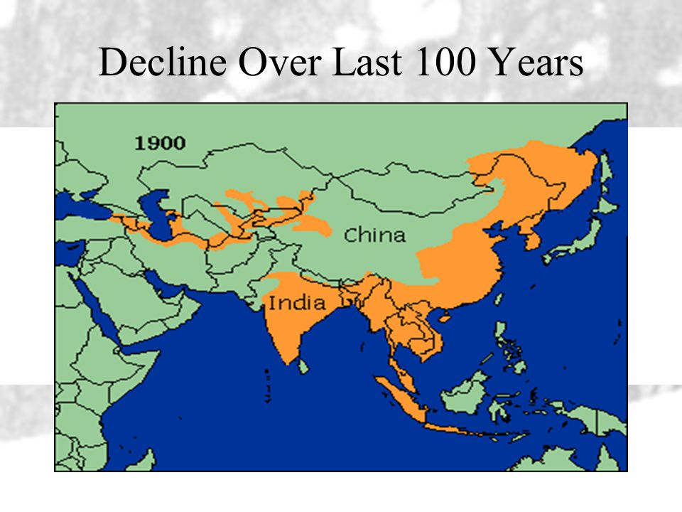 Decline Over Last 100 Years