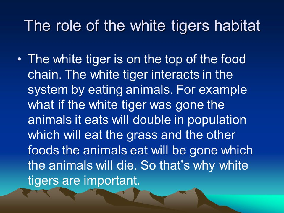 importance of tigers in the ecosystem The tiger is an iconic species tiger conservation attempts to prevent the animal  from becoming extinct and preserving its natural habitat this is one of the main.
