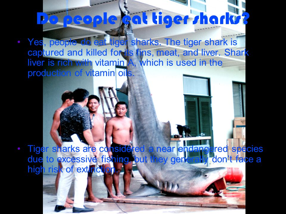 Do people eat tiger sharks