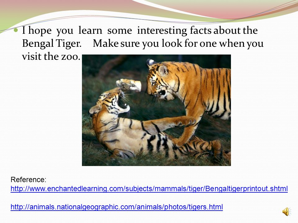 I hope you learn some interesting facts about the Bengal Tiger