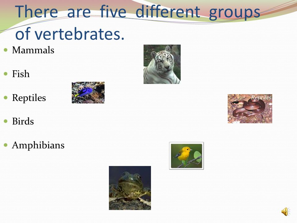 There are five different groups of vertebrates.