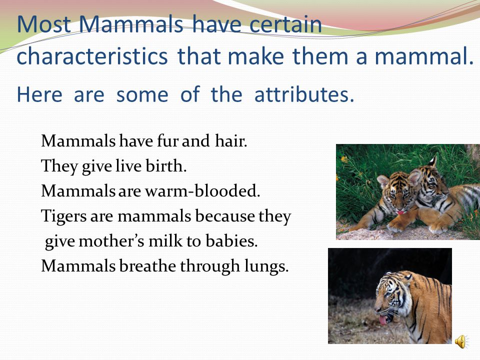 Most Mammals have certain characteristics that make them a mammal