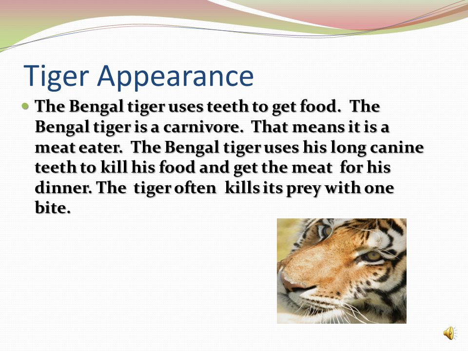 Tiger Appearance