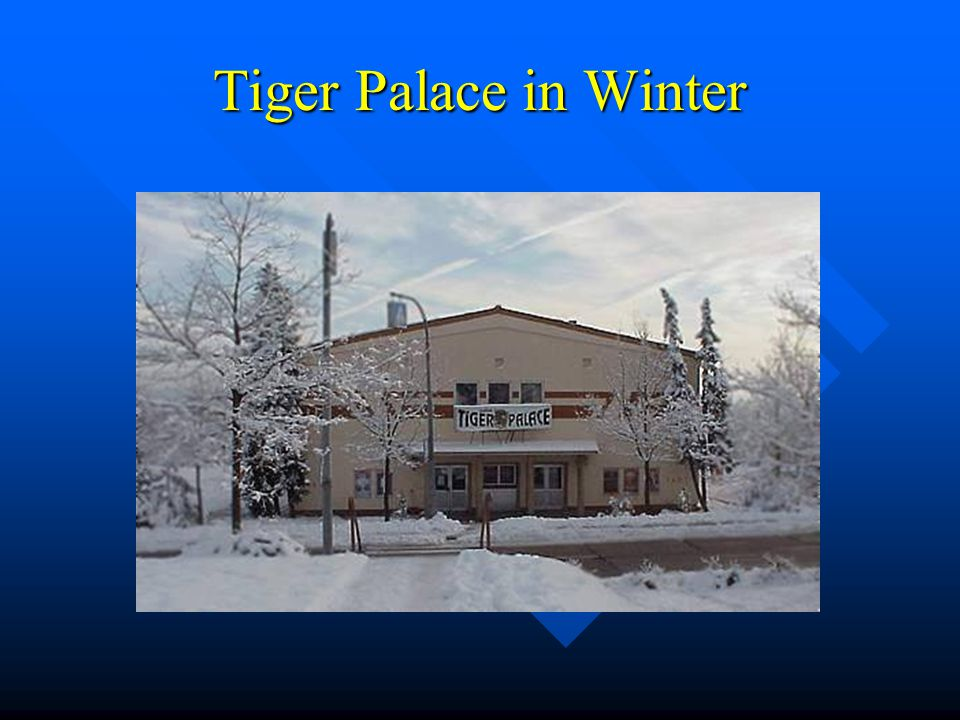 Tiger Palace in Winter