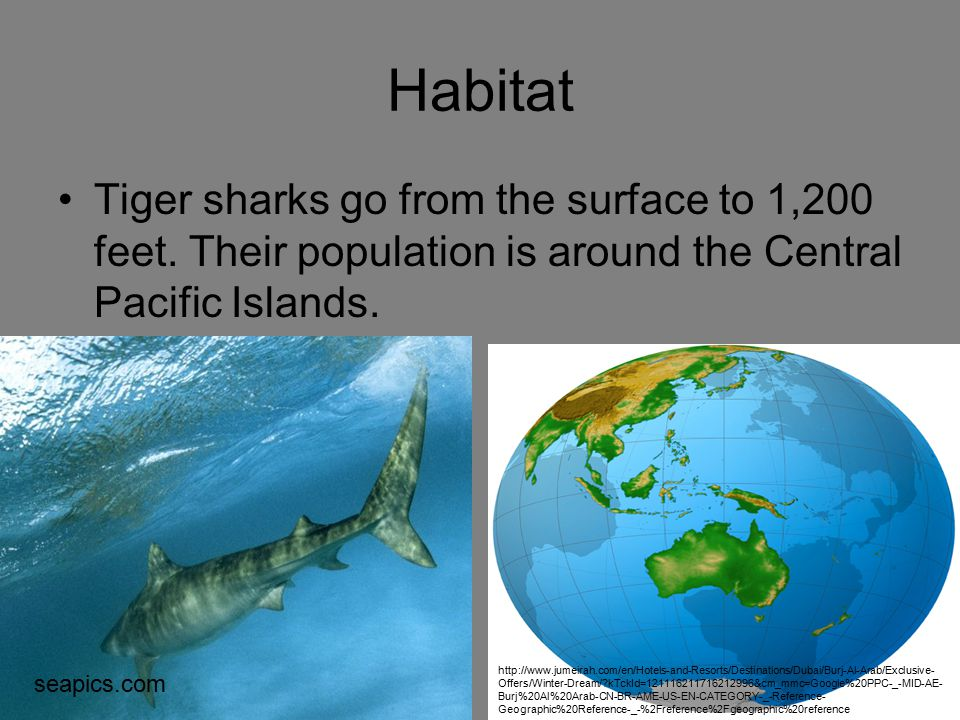 Habitat Tiger sharks go from the surface to 1,200 feet. Their population is around the Central Pacific Islands.