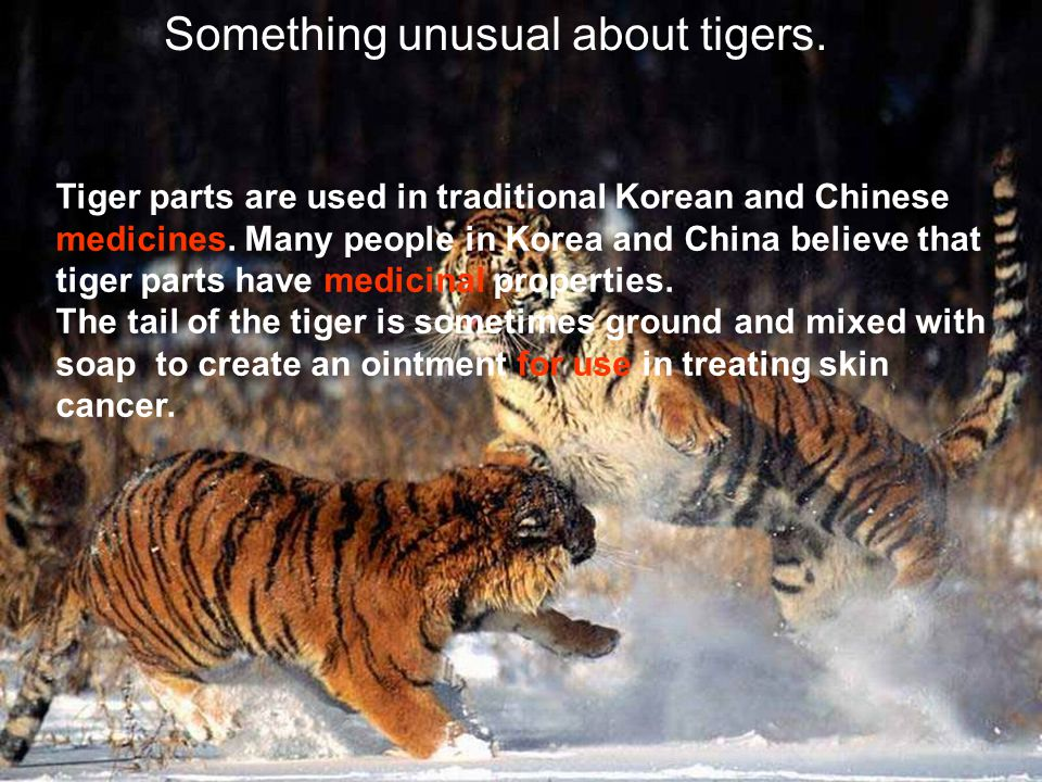 Something unusual about tigers.