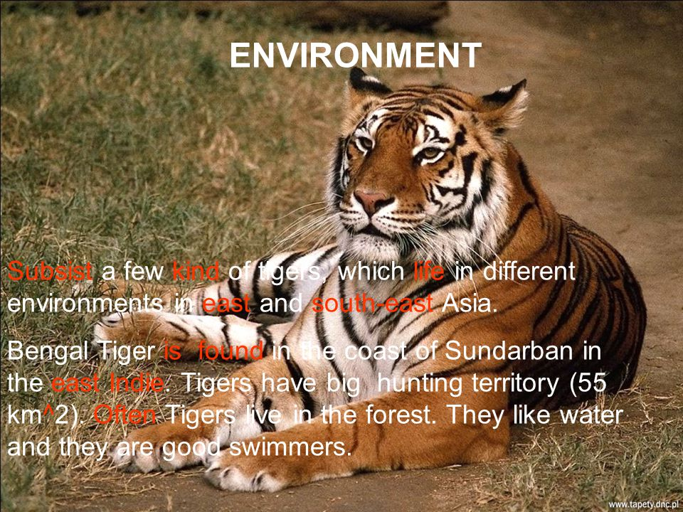 ENVIRONMENT Subsist a few kind of tigers, which life in different environments in east and south-east Asia.