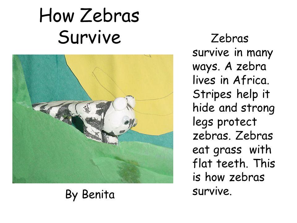How Zebras Survive