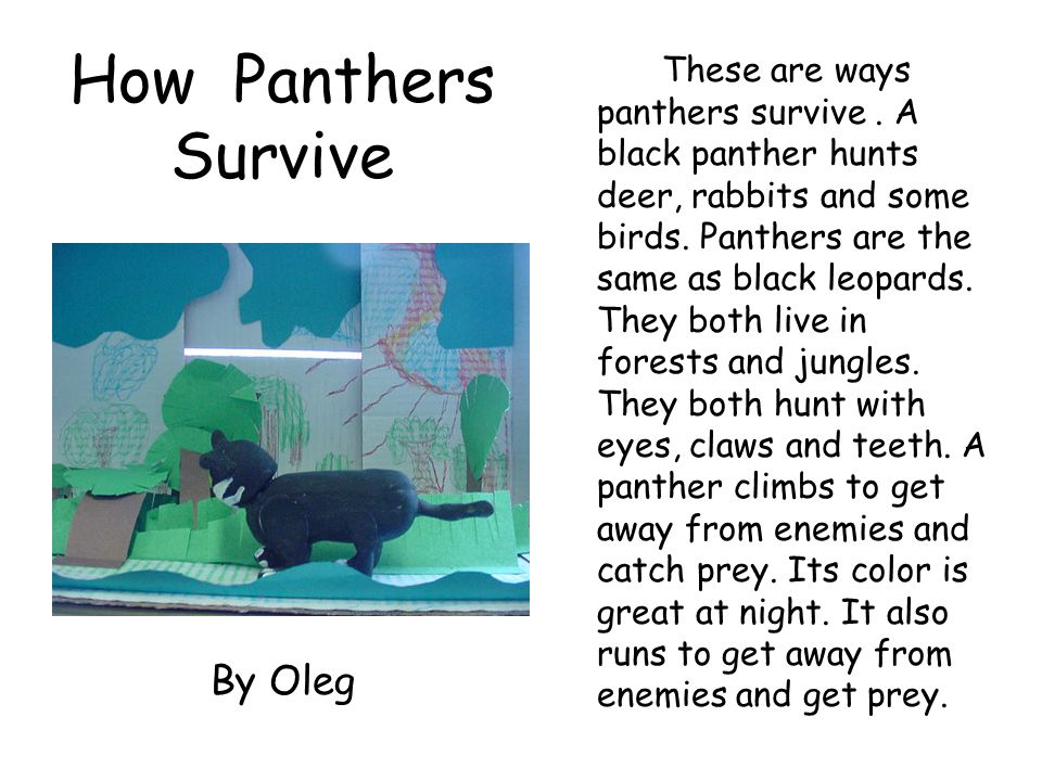How Panthers Survive By Oleg