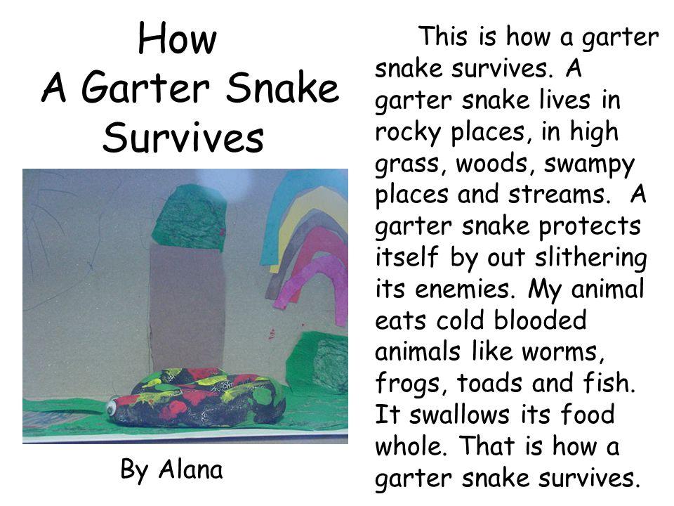 How A Garter Snake Survives