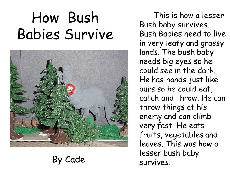 How Bush Babies Survive