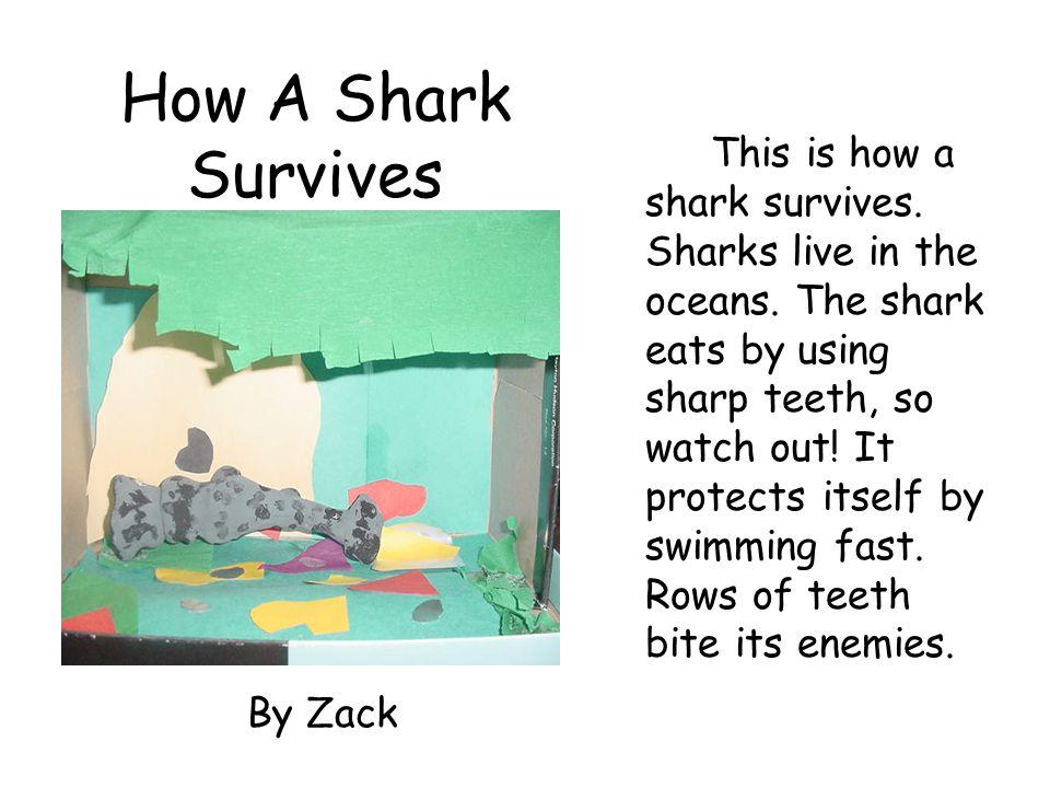 How A Shark Survives