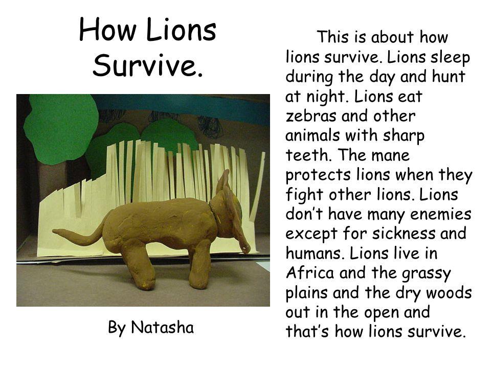 How Lions Survive.