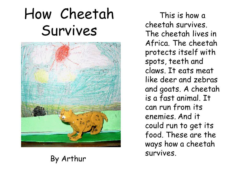 How Cheetah Survives