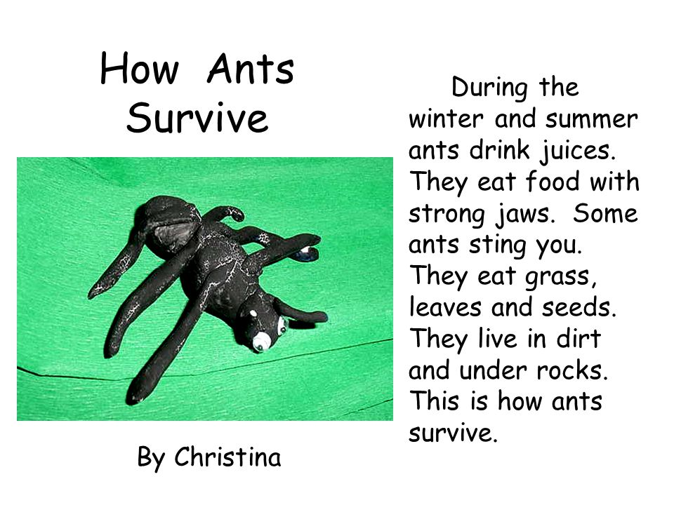 How Ants Survive By Christina