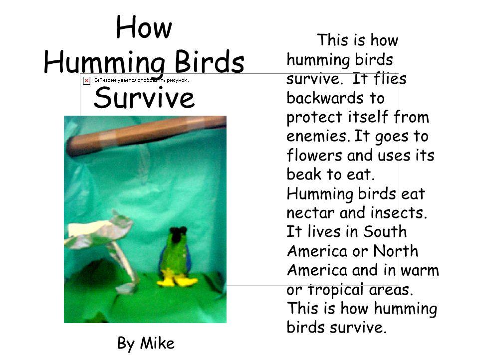 How Humming Birds Survive