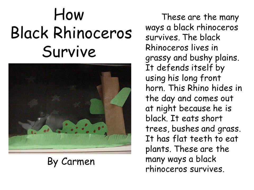 How Black Rhinoceros Survive