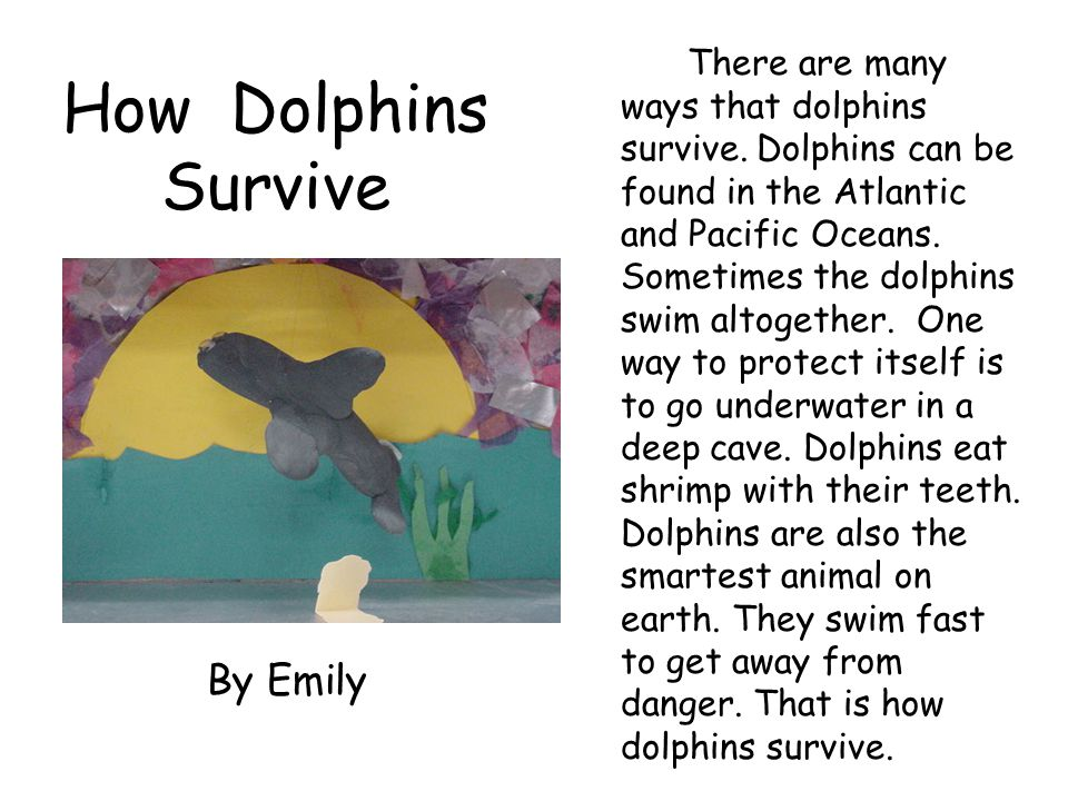 How Dolphins Survive By Emily