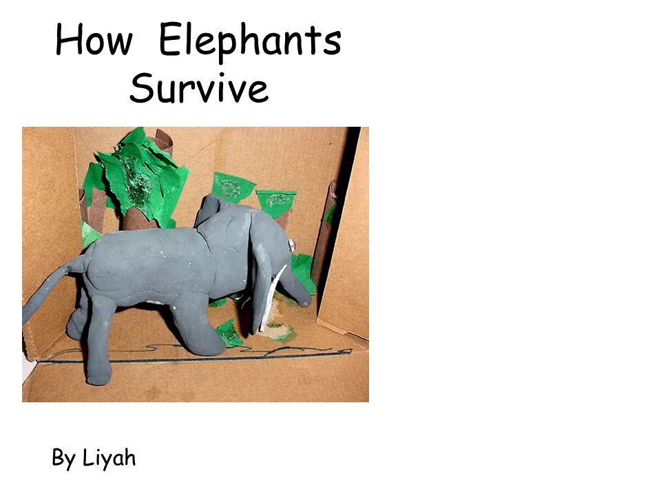 How Elephants Survive By Liyah