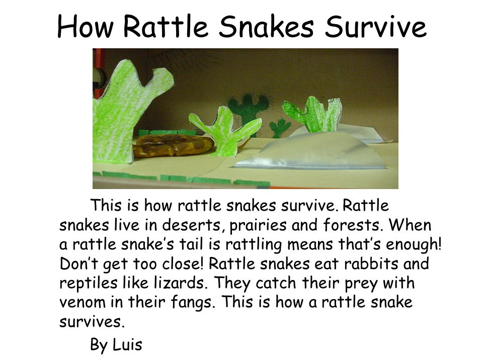 How Rattle Snakes Survive