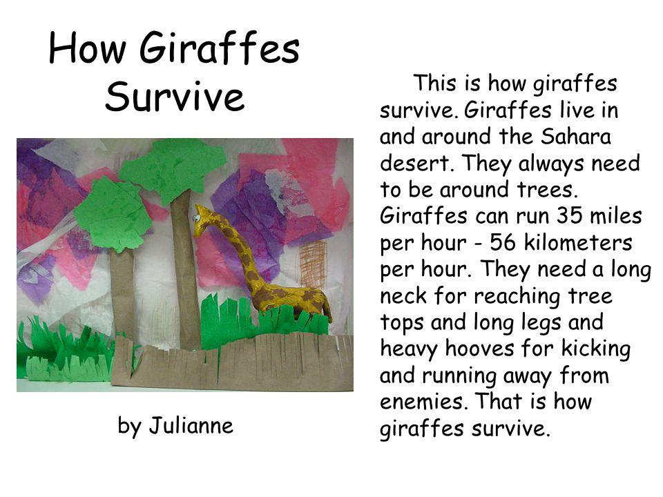 How Giraffes Survive