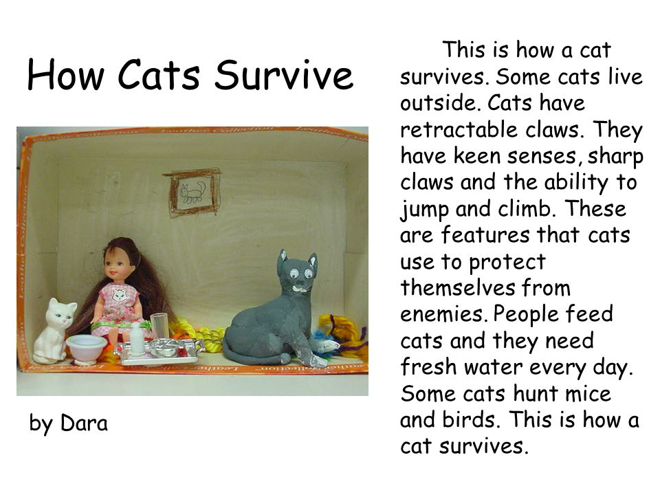 This is how a cat survives. Some cats live outside
