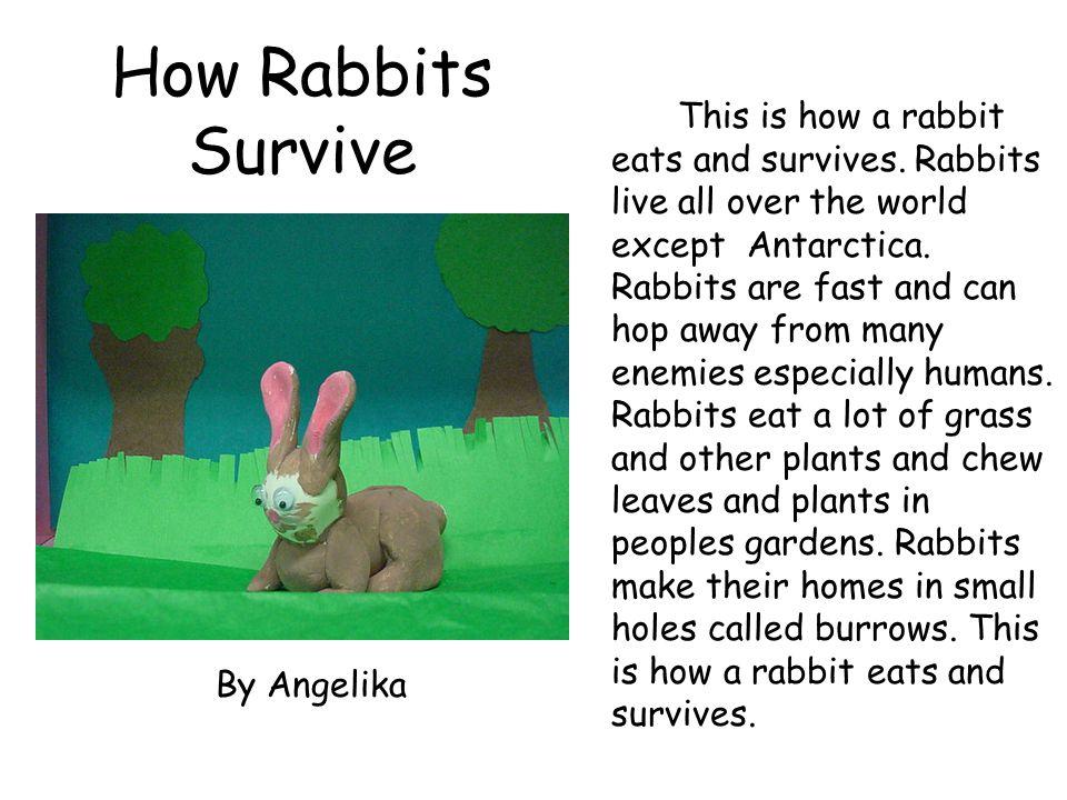 How Rabbits Survive