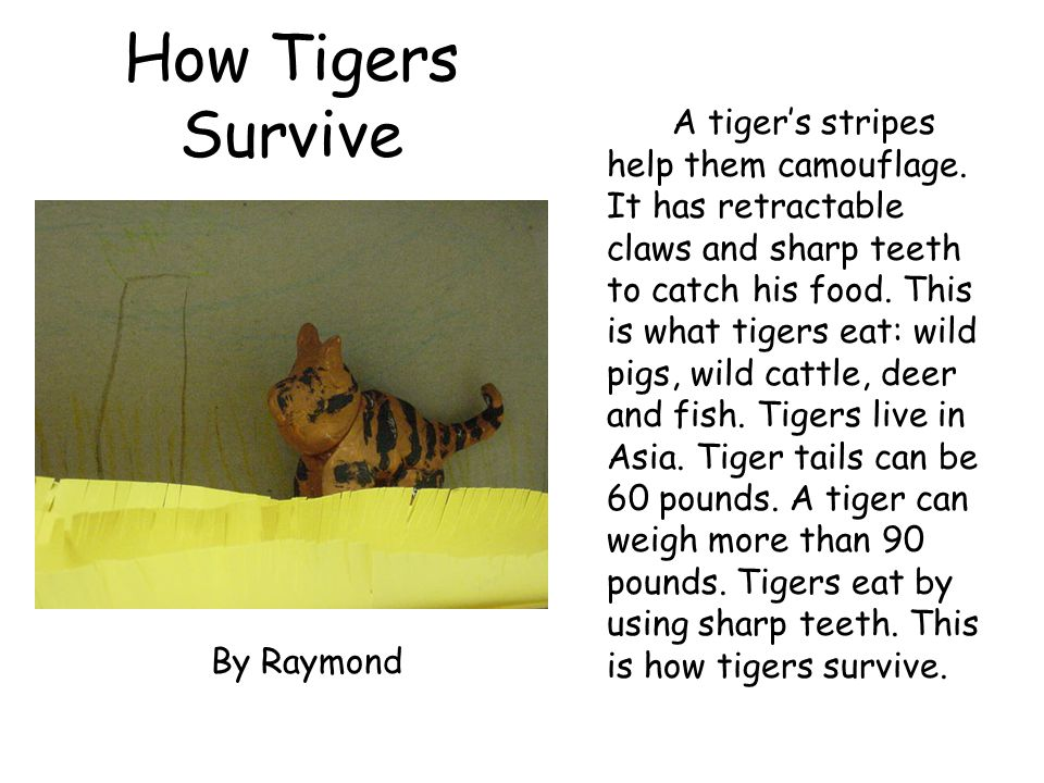 How Tigers Survive