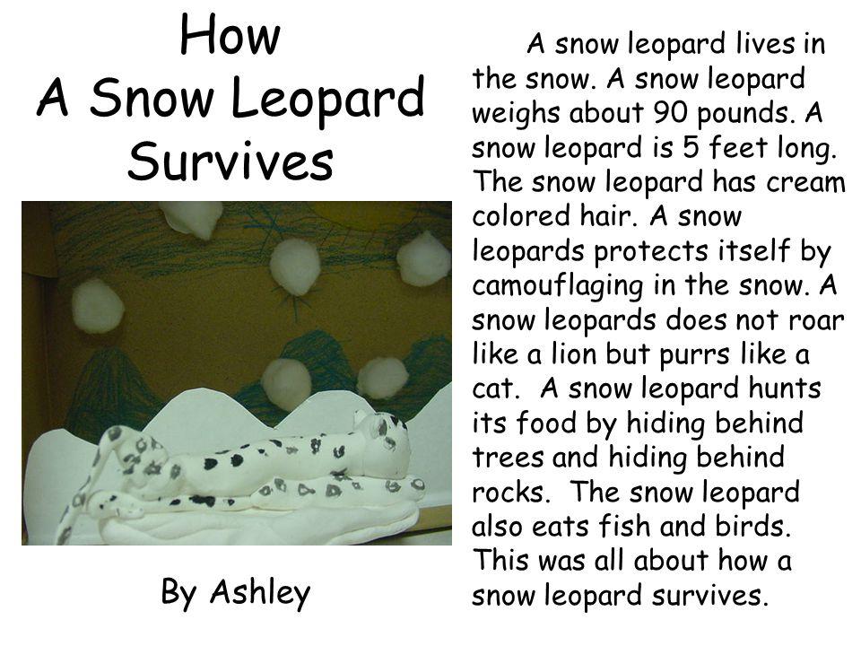 How A Snow Leopard Survives