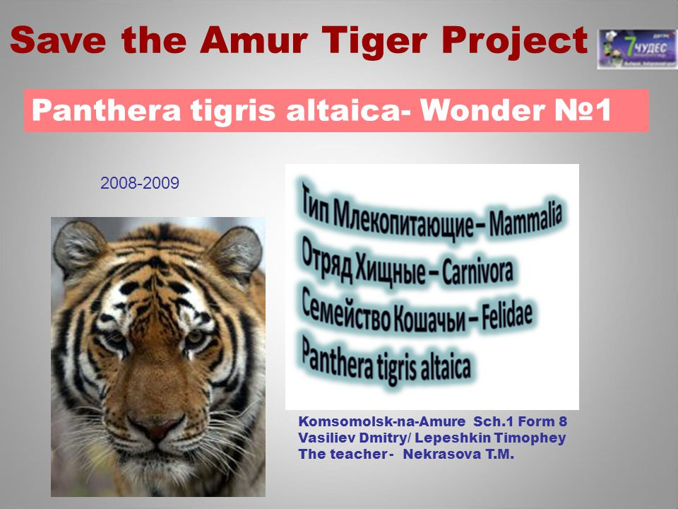 Save the Amur Tiger Project