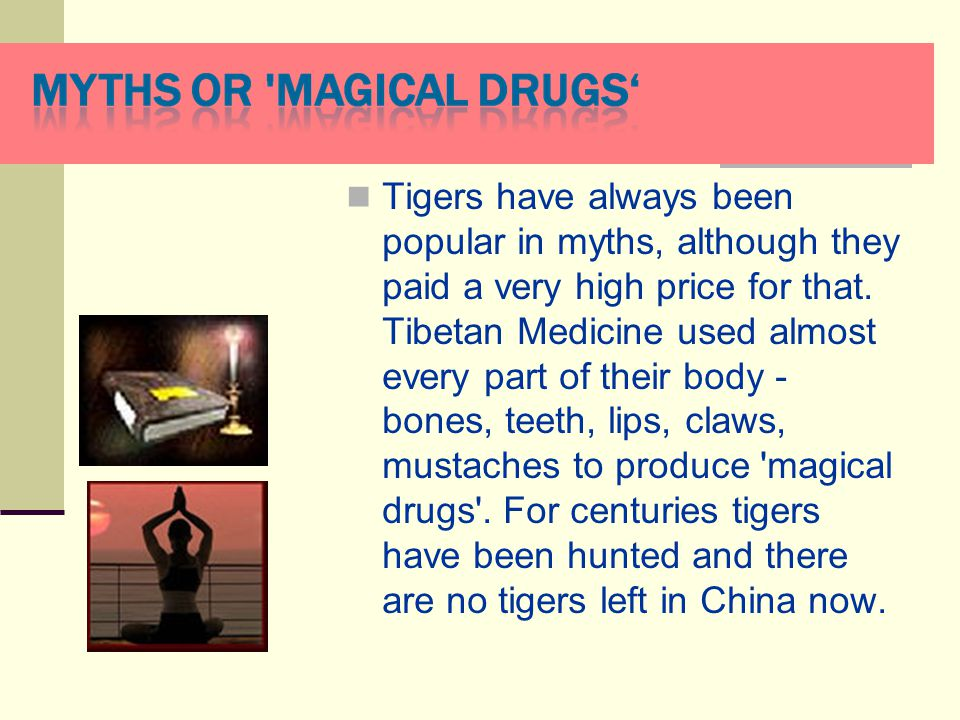 Tigers have always been popular in myths, although they paid а very high price for that.