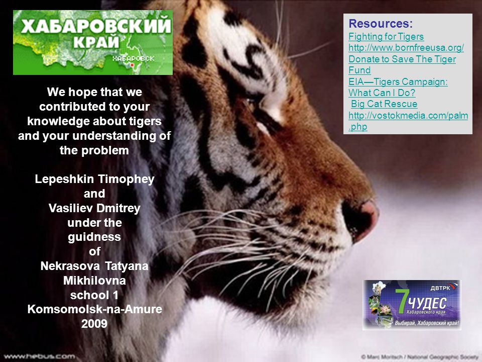 Resources: Fighting for Tigers. http://www.bornfreeusa.org/ Donate to Save The Tiger Fund. EIA—Tigers Campaign: What Can I Do