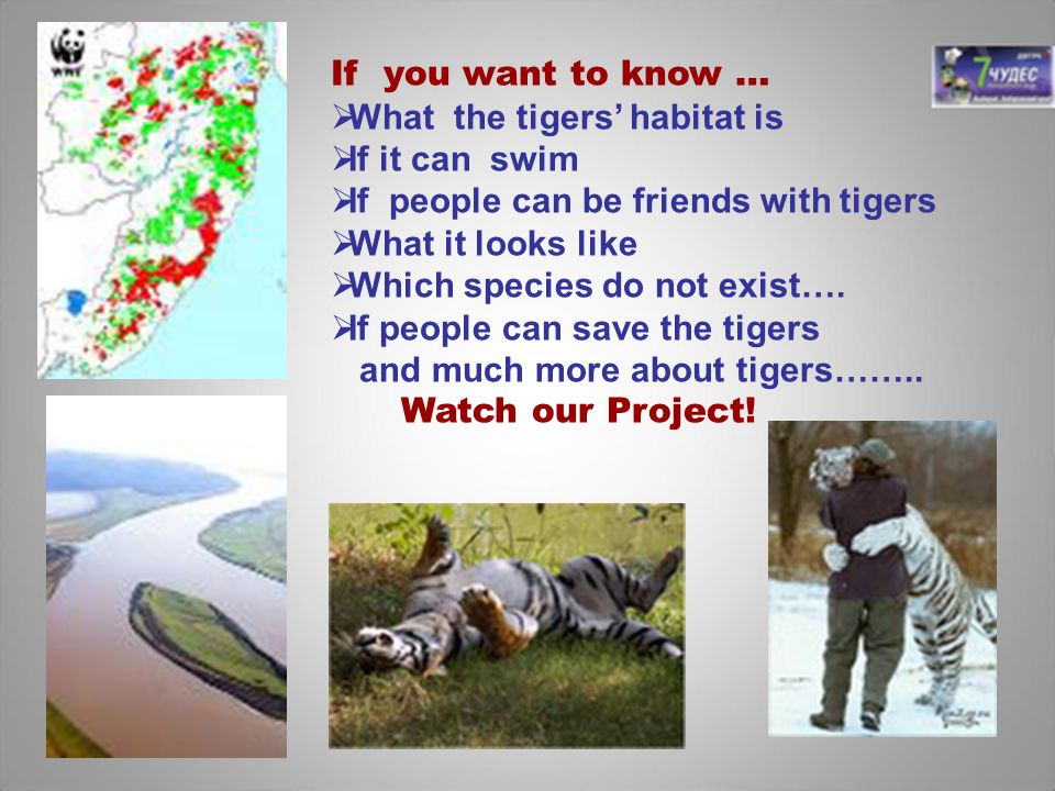 If you want to know … What the tigers' habitat is. If it can swim. If people can be friends with tigers.
