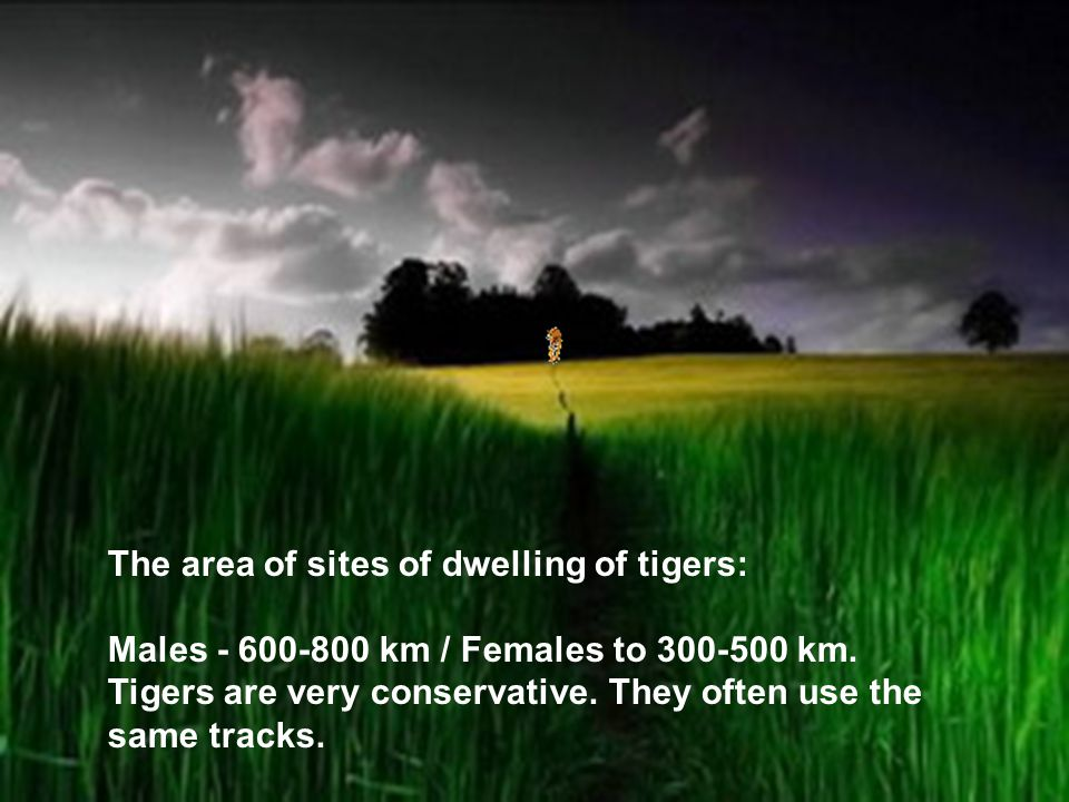 The area of sites of dwelling of tigers: