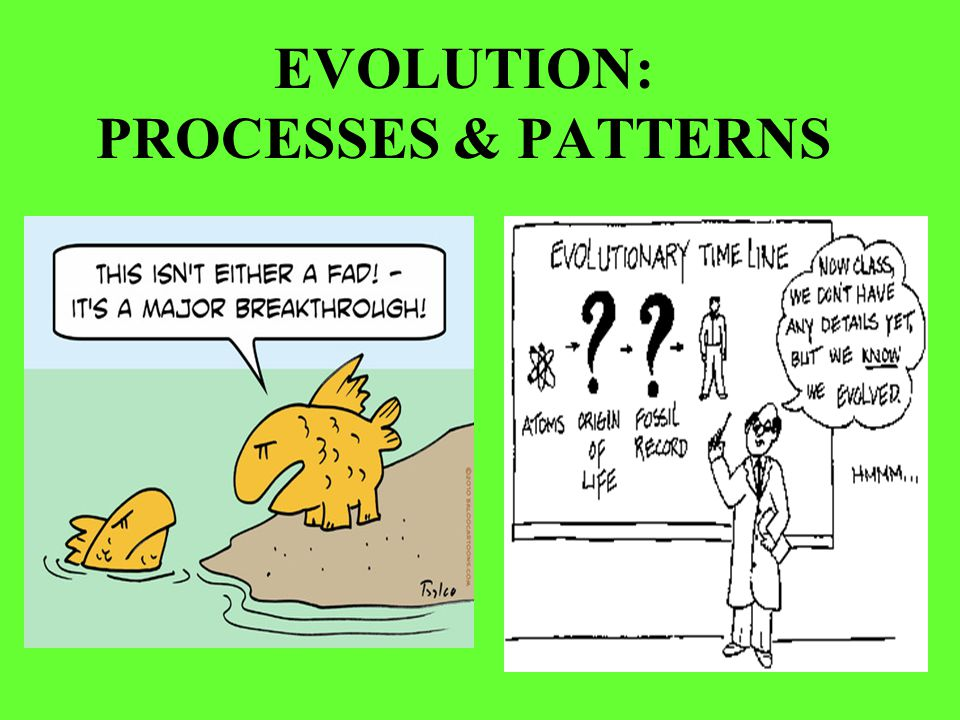 EVOLUTION: PROCESSES & PATTERNS