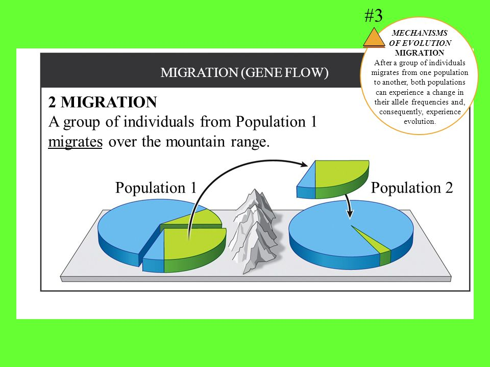 #3 MECHANISMS. OF EVOLUTION. MIGRATION.