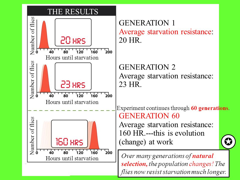  THE RESULTS GENERATION 1 Average starvation resistance: 20 HR.