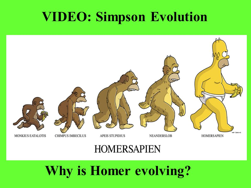 VIDEO: Simpson Evolution